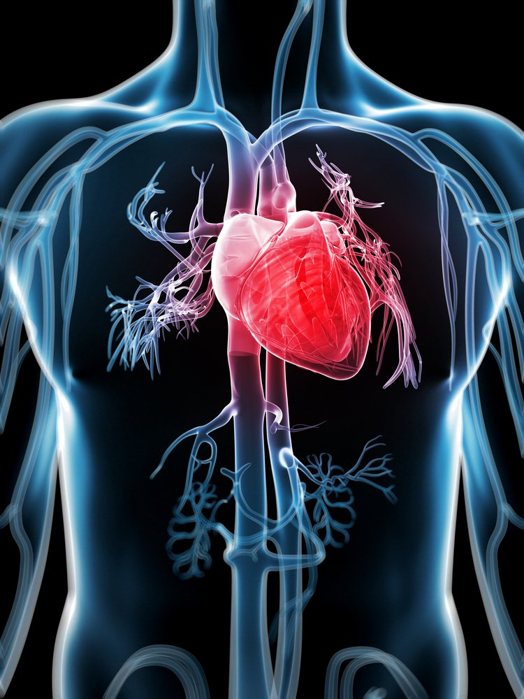 L-Carnitine- Its effect on heart
