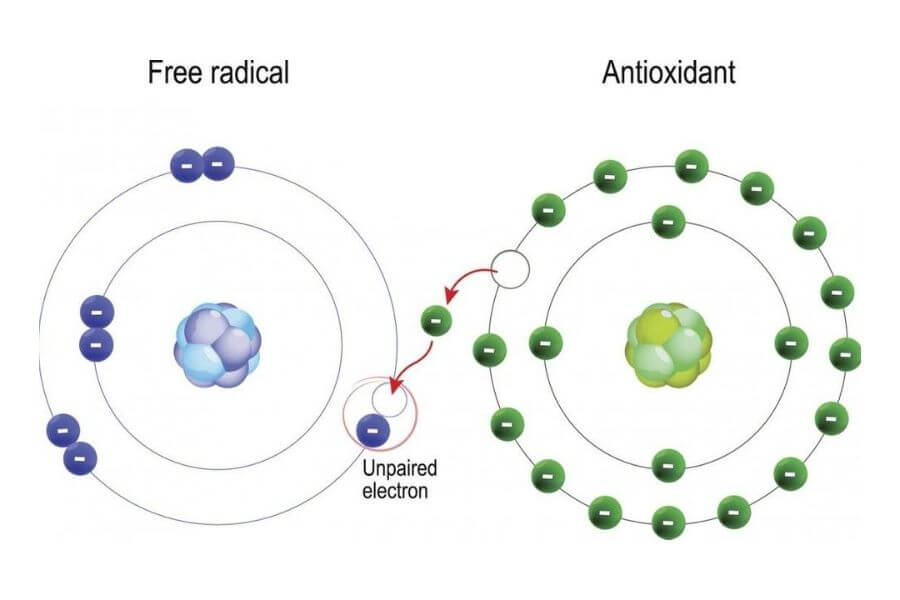 What Are Antioxidants?