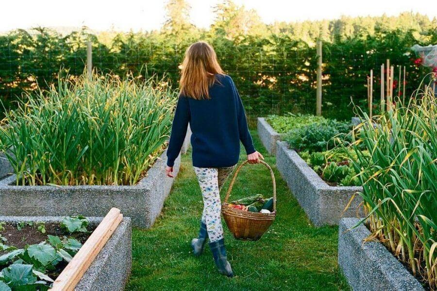 Grow And Develop Your Own 'KITCHEN GARDEN'