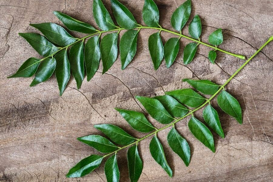 Get Those Curry Leaves Out Of Your Backyard