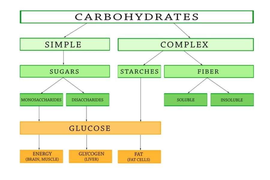 Different Types Of Carbs