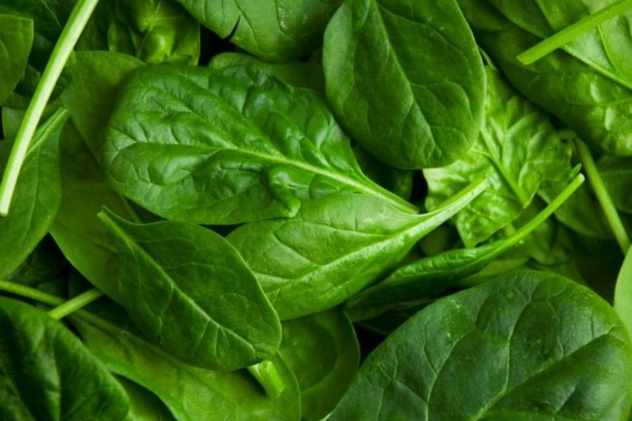 Spinach Prevents Iron-deficiency Risk