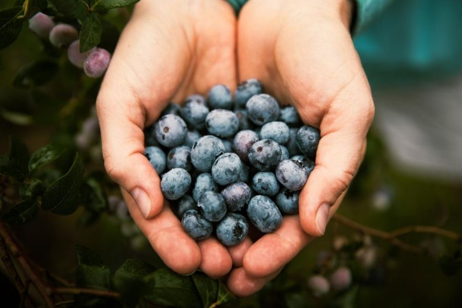 Blueberries And Heart Ailments
