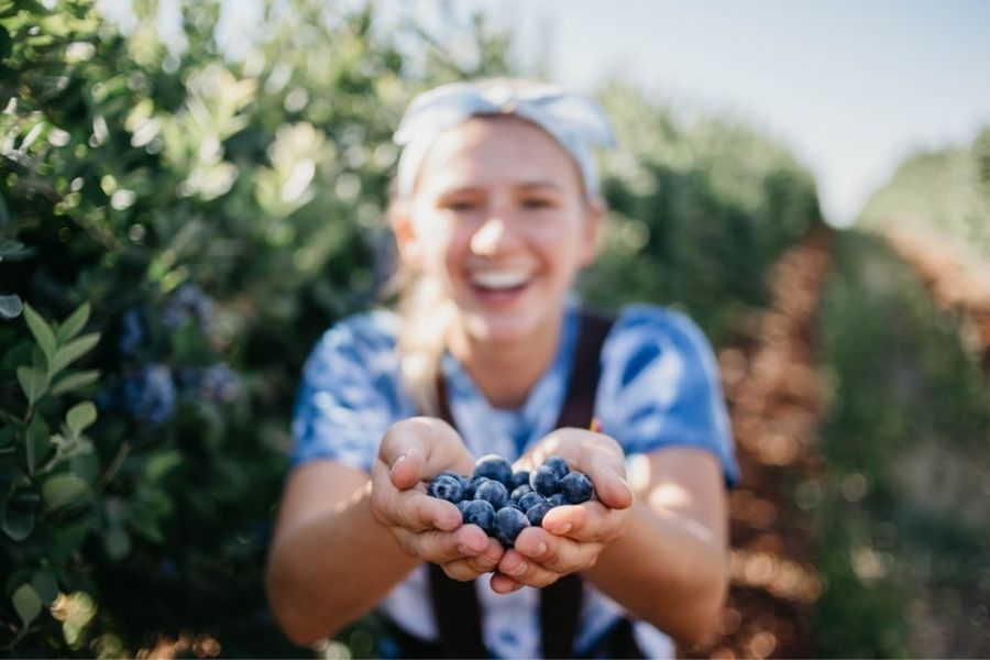 Blueberries And Mental Health