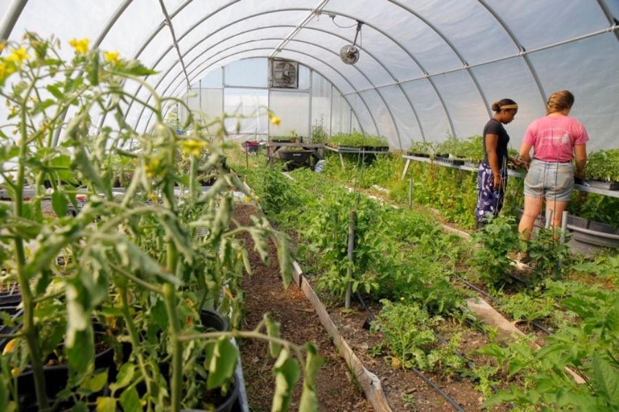How Is Institutional Farming Important?