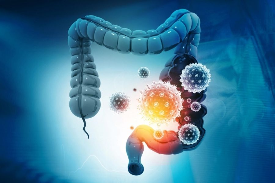 Hot Topic: Gut Microbiota And Covid-19 Researches