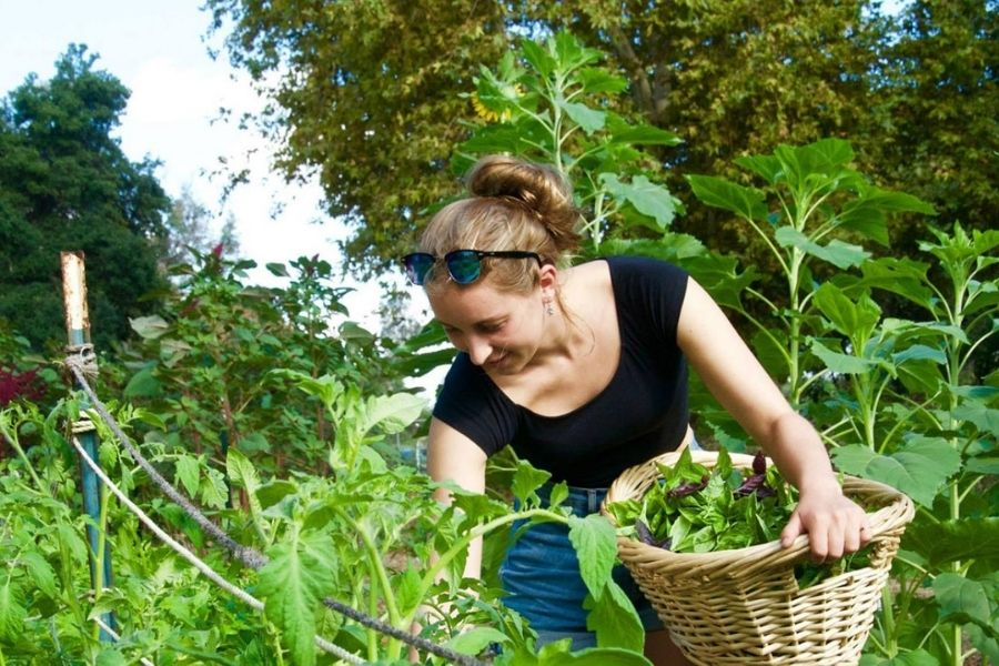 College As A Learning Abode For Food Localism